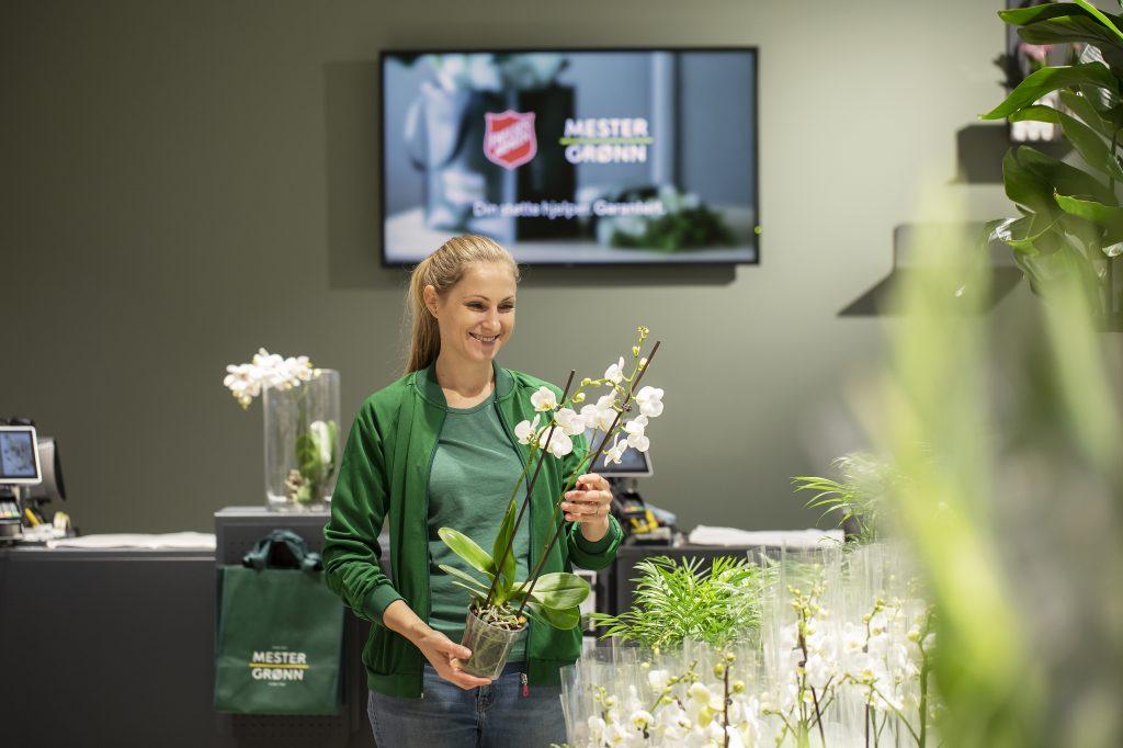 Mester Grønn butikkansatt med orkide